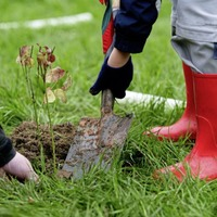 Outdoors: Woodland Trust's tree planting scheme is really taking root