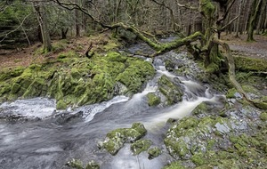 Take on Nature: Branching out with a walk through Tollymore forest