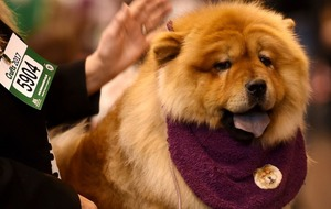 11 dogs at Crufts that are so extra it hurts
