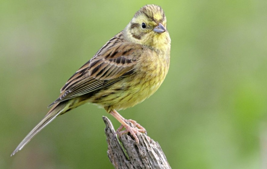 Exotic visitors turn up in charity's bird survey