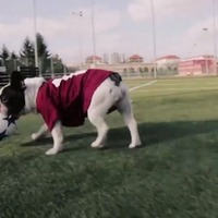 These canine footballers' love for the game will fill your heart with joy
