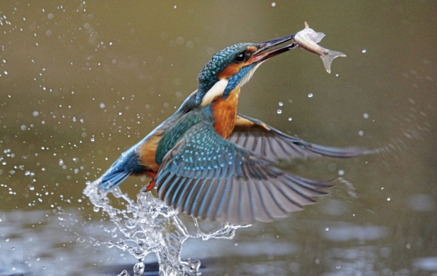 Take On Nature Why The Kingfisher Is Known As The Halcyon Bird The Irish News