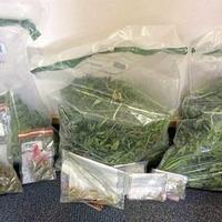 Cannabis worth £40,000 seized in Coleraine