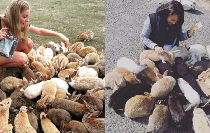 There is a rabbit island in Japan and it's the cutest thing ever