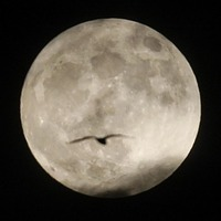 The Pink Moon: All you need to know about the astronomical phenomenon