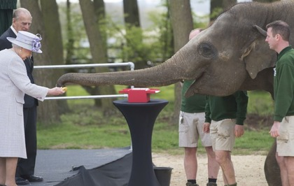 Watch The Queen Feed An Elephant A Banana At Whipsnade Zoo The