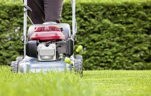 The Casual Gardener: Love your lawn