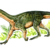 Apparently early dinosaurs looked like crocodiles