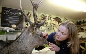 Co Down taxidermist Ingrid Houwers provides a close-up look at nature