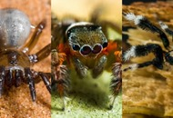 Over 50 new species of spider have been discovered in Australia and excuse us while we freak out