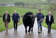 Newry Show to host Aberdeen Angus extravaganza