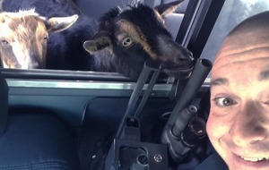 This policeman reunited two miniature goats with their owner and it looks like a really great day at work