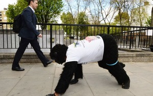 Video: This guy dressed as a gorilla is crawling the London Marathon - still