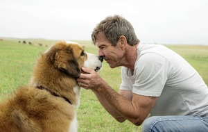 Lasse come home: A Dog's Purpose is sentimentality reincarnated