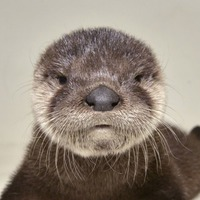 Video: This adorable baby otter was rescued from a canal by workmen