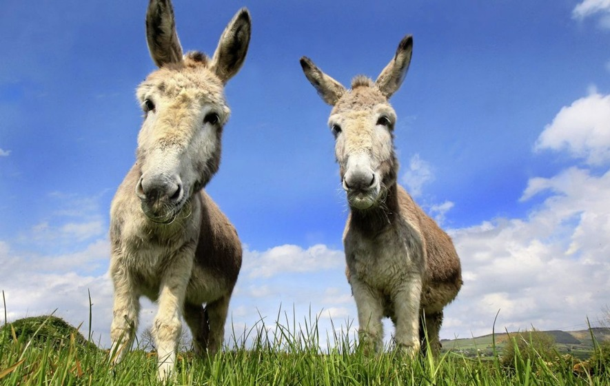 Animal lovers rally to save Donegal donkey sanctuary from closure