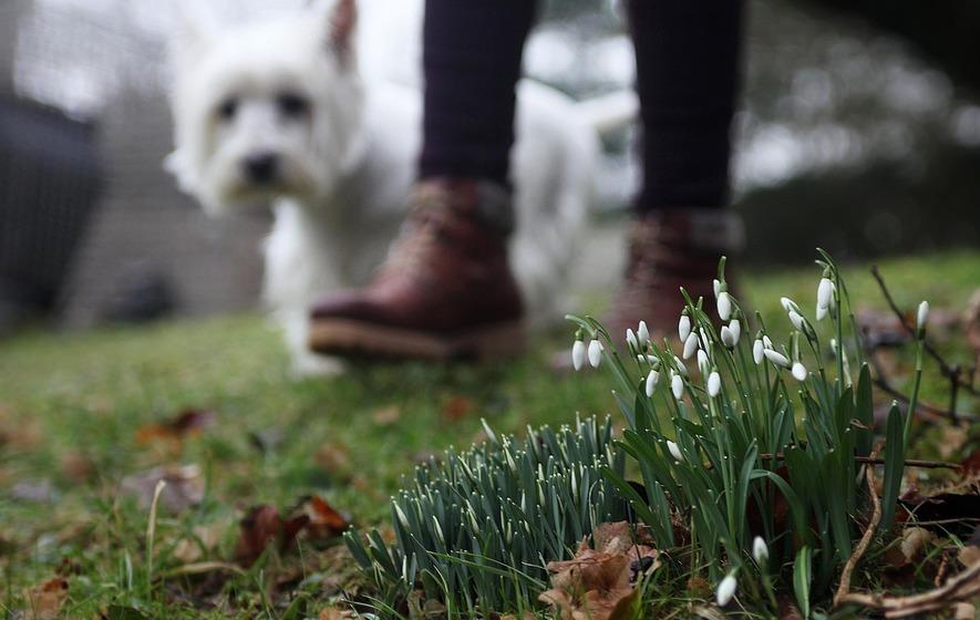 Dog Friendly Bars In Derry Nothern Ireland