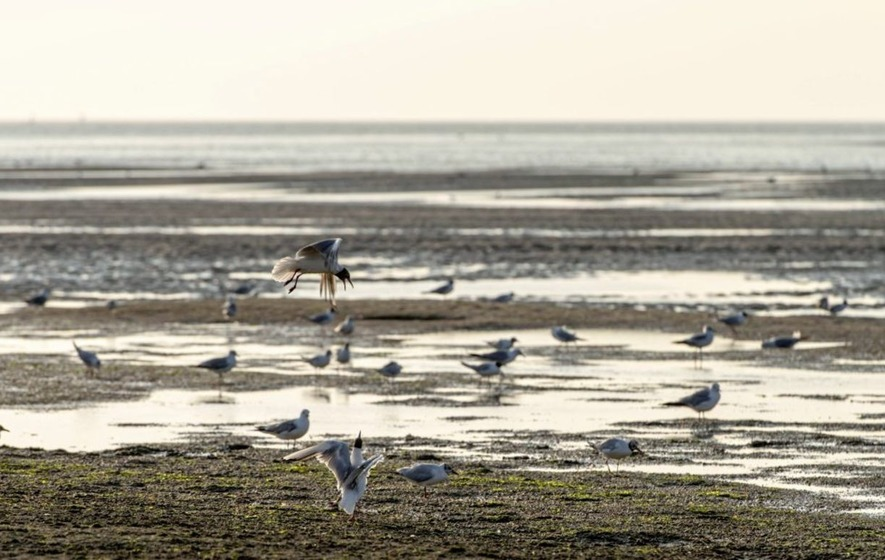 Travel: Discover a wildlife haven at the mouth of the Somme
