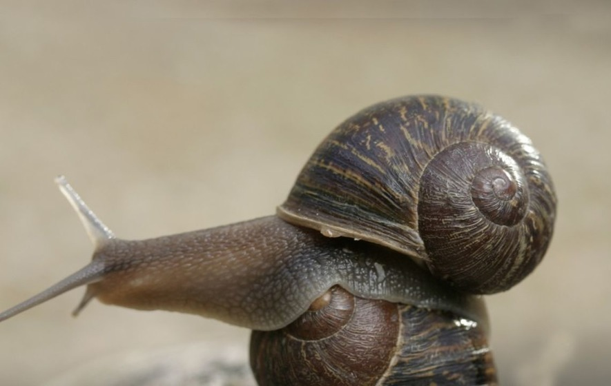 Jeremy the lonely snail got caught in a love triangle and things got pretty awkward...