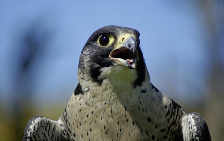 Police use drones to combat attacks on birds of prey