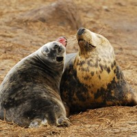 Hormone injections can help spread the love between strangers, seal study shows