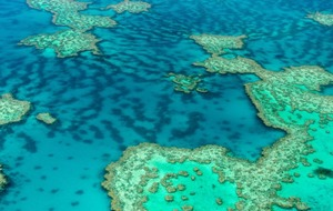 The Great Barrier Reef lost nearly a third of its corals in 2016