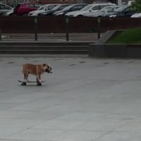 Victor the skateboarding dog has fun in CS Lewis Square in east Belfast