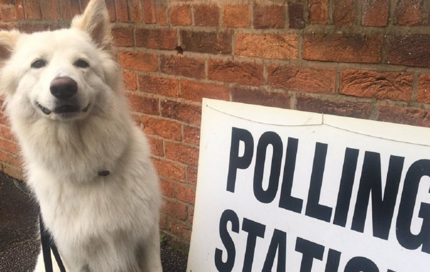 Meet some of the glorious dogs at polling stations