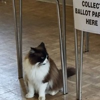Move over dogs at polling stations, because this year cats refuse to be outdone