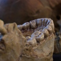 300,000-year-old fossils discovered in Morocco could potentially change the date of human evolution