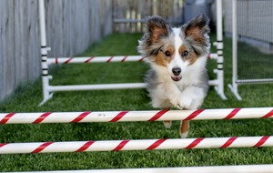 Outdoors: Pop-up canine fun park Doggy Dynamos a first for Belfast