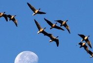 Birds in 'Goldilocks' habitats have best chance against global warming