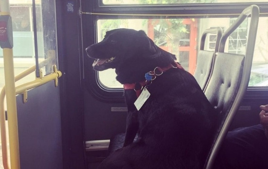 This incredibly talented dog has become a local celeb by riding the bus by herself every day