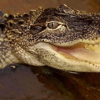 This man was bitten by an alligator and you can feel his pain