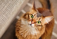 Scientists have worked out how cats became our beloved pets
