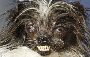 Owner of the world's ugliest dog hopes to promote his inner beauty