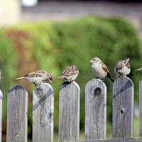 Take on Nature: Sparrow in the hall