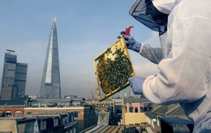 Be good to bees: top tips on how to help nature's fuzzy buzzers