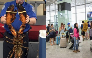 The owner of the lobster that went viral isn't happy about its treatment by airport officials