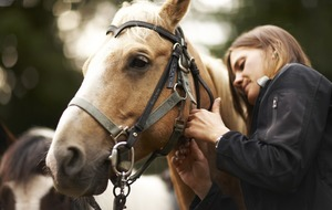 Horses may have originated in Arabia and central Asia, DNA analysis shows