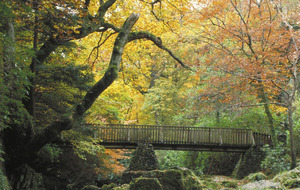 Invite a tree to tea with free Woodland Trust picnic packs