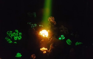 Selfies with glowing corals and other awesome things to do at the Royal Society's science exhibition
