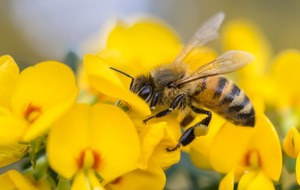 How honeybees could help us create better smartphone cameras
