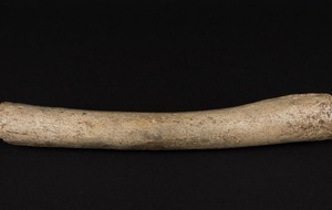 DNA from this 124,000-year-old bone suggests humans and Neanderthals mated much earlier than thought