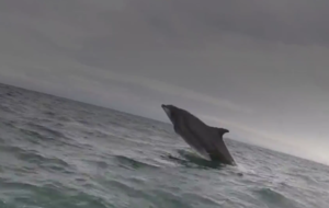 Watch this amazing pod of dolphins join a Scottish rescue crew