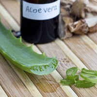 Going green with 'miracle plant' Aloe Vera