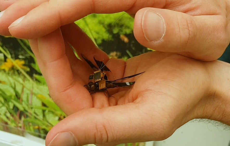 Cyborg dragonflies are officially a reality after tiny insects complete first test flight