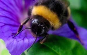 Don't Step on a Bee Day: Here's why we should be taking care of our stripy friends