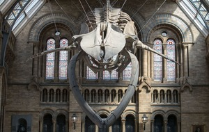 Blue whale skeleton replaces Dippy at the Natural History Museum and the internet is giddy with joy