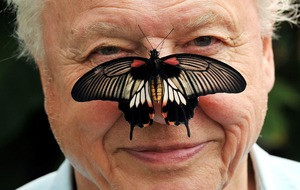 Sir David Attenborough wants us all involved in the Big Butterfly Count